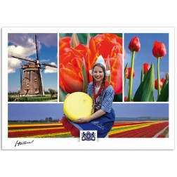 h17-002 windmill tulips tulip fields cheese girl