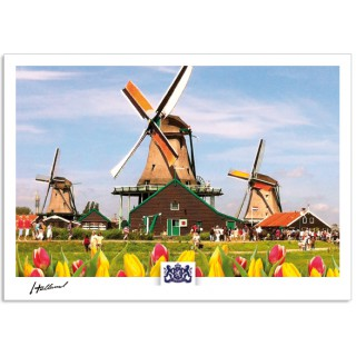 h17-003 ansichtkaart Holland molens Zaanse Schans