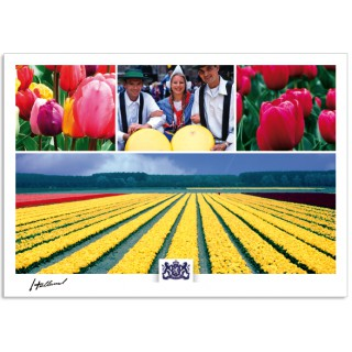 h17-005 Holland tulips cheese market tulip fields