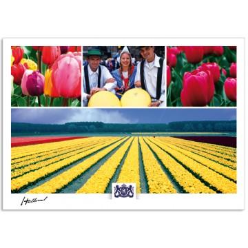 h17-005 Holland tulips cheese market tulip fields