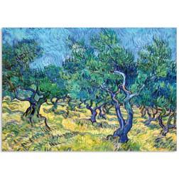 Art13 postcard Olive Grove Vincent van Gogh
